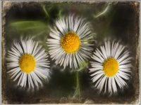 Flowers-n.-18